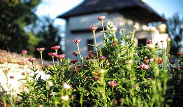 Aufgang zum Garten © Nafez Rerhuf