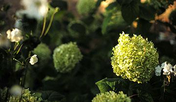 Garten © Nafez Rerhuf