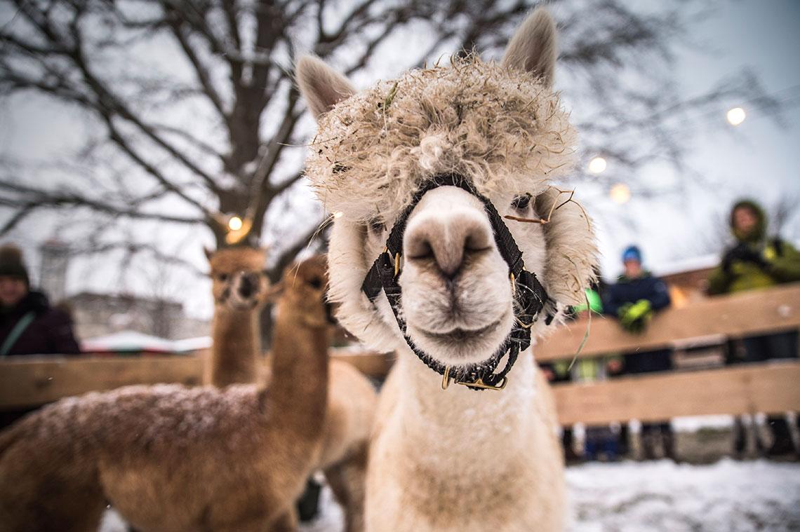 Veranstaltungen, Christkindlmarkt, 2018 © Daniela Matejschek